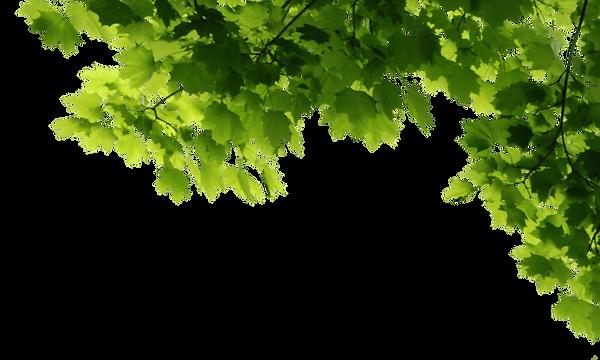 groen2.png