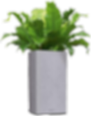 deconcepto-planta-promo.png