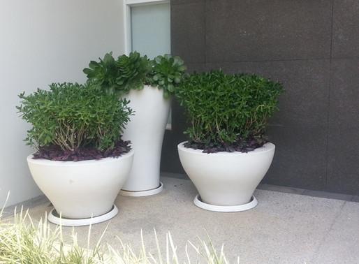 Descubre la mejor forma de proteger tus pisos de macetas y plantas