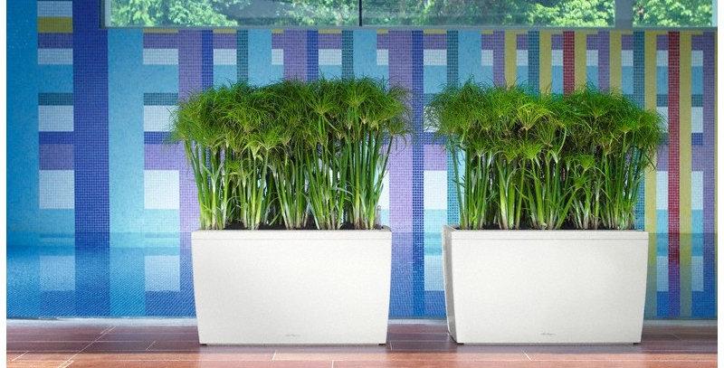 Jardinera Carraro Maceta Con Sistema Autoriego