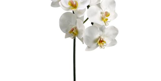 "Orquidea Phalaenopsis 37.5"""
