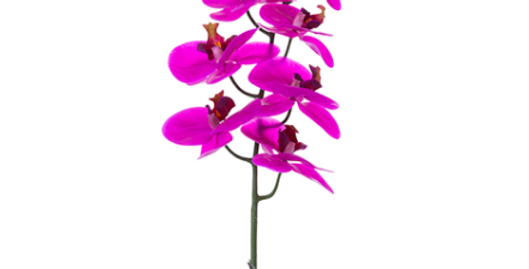 "Orquidea Phalaenopsis 36"""