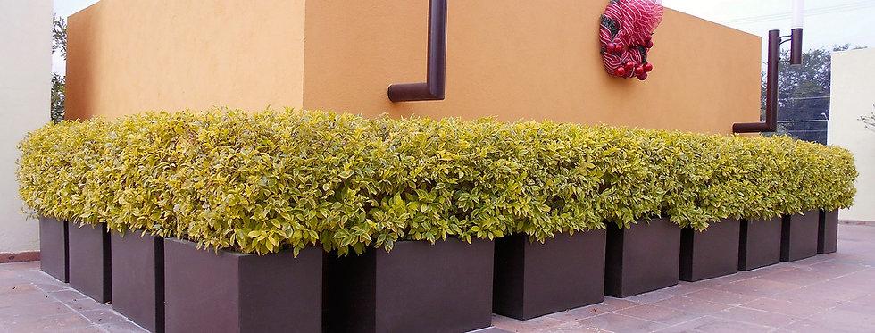 Jardinera XY Sencilla