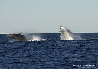 RA Whales 2004.jpg