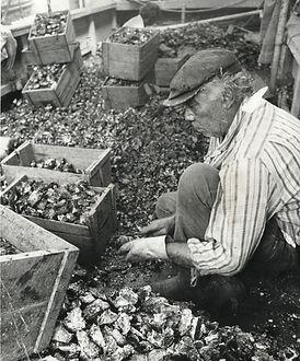 Oyster Farmers 1.jpg