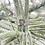 Thumbnail: 14K White Gold Baguette and Round Diamond 1.09cttw Semi Mount