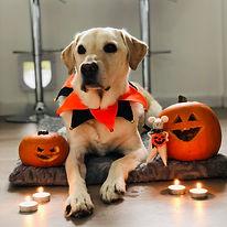 Beau's pumpkins! (for cuteness!).HEIC