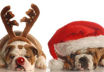 Buldogues de Natal