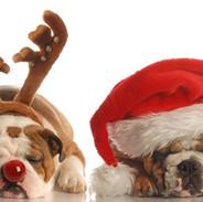 Christmas Bulldogs