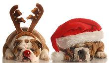 Bulldogs di Natale