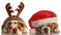 Pour un Noël original avec Amidoux