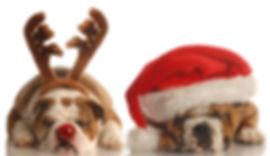 Holiday dog names