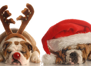 5 Ways to Celebrate the Holidays with Your Pets
