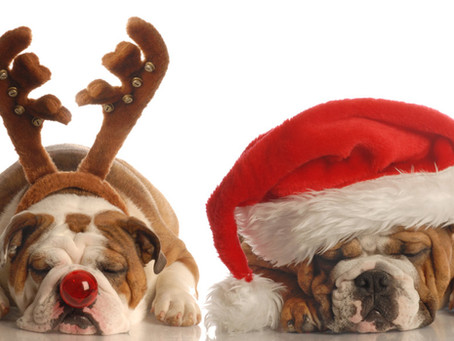 Pet Stress - Pets Don't Stress Over Holiday Shopping, but the Season isn't Always a Walk the Park.