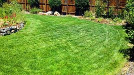 Lawn3.jpg