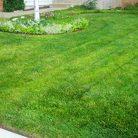 lawn5.jpg