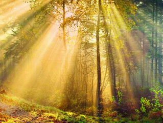 The Healing Power of Touch and Benefits of Nature Therapy