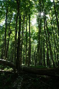 light shining through trees