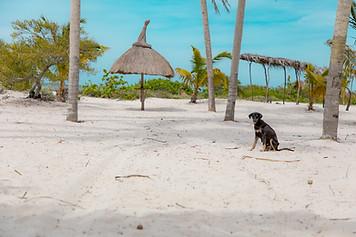 yucatan beach dog