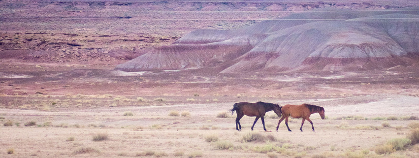 horses in canyon