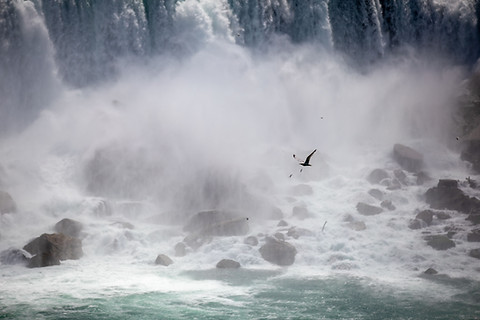 bird niagara falls