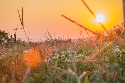 dreamy flower sunset