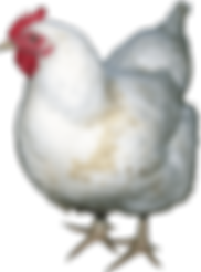 Free Range Eggs Waukesha | New Berlin | Oconomowoc | Pewaukee | Farm Fresh Turkey | Thanksgiving | Muskego Chickens | Cage Free Eggs