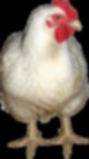Vintage Farm | Cage Free Chicken Eggs | Waukesha's best egg supplier