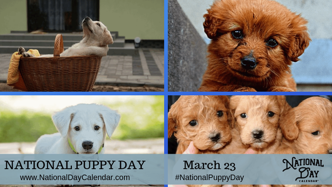 🍎 Happy National Puppy Day from GFCC!