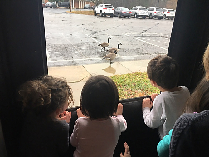 A Little Geese Watching with the Polka Dot Puppies
