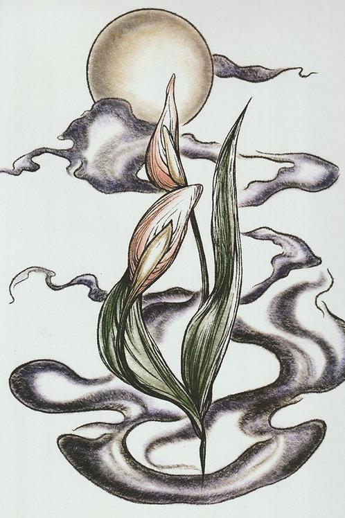 Iris Print by Charlotte