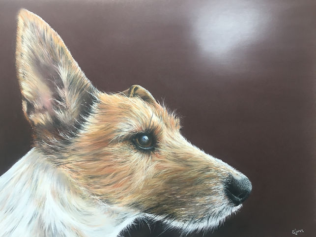 pastel painting of Milo, a Jack Russell terrior