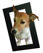 jack russel with picture frame