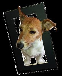 Milo framed2.png
