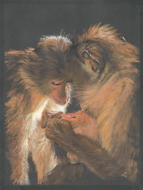 Animal Love.jpg
