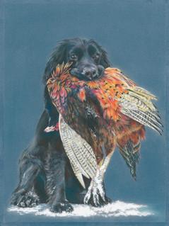 Spaniel with pheasant