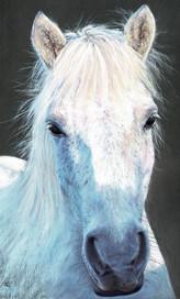 Alfie3 cropped4.jpg