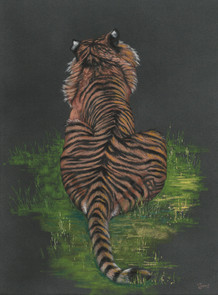 Tiger back on black.jpg