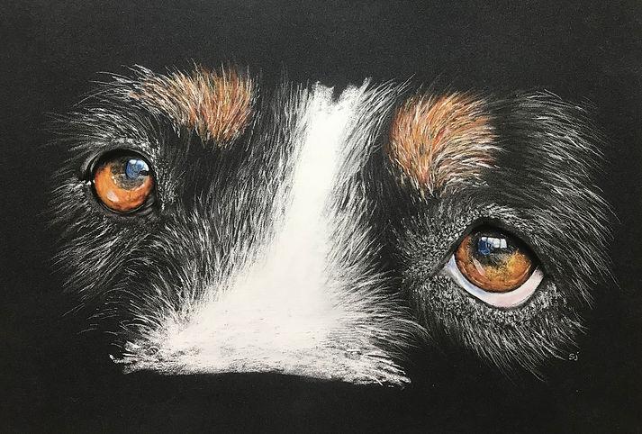 Dog Eyed.JPG