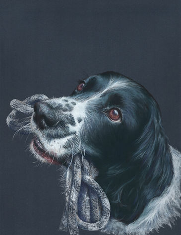 Riley - Dog paintings in pastels