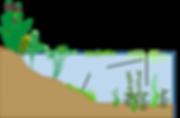 aquatic plants with lines