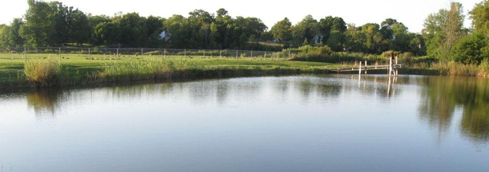 Pond Management.jpg
