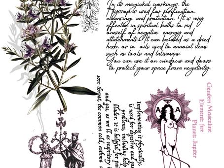 Herb of the week - Hyssop (Hyssopus officinalis)