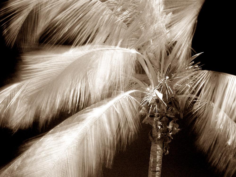 Palm Frondscanvas.jpg
