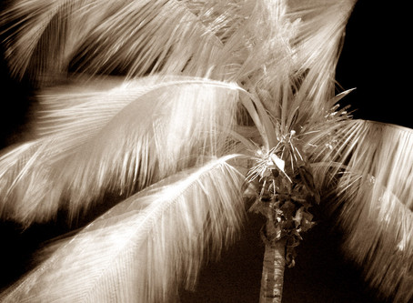 History of My Infrared Photography...  Film, Filters & Full IR Conversion
