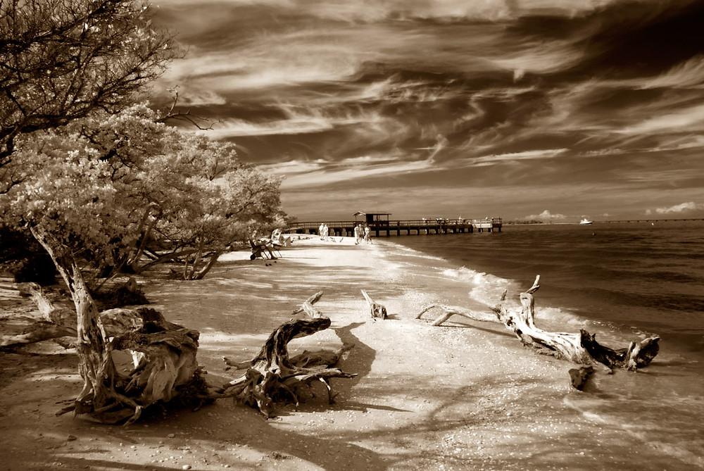 Fishiing Pier with Driftwood big can.jpg
