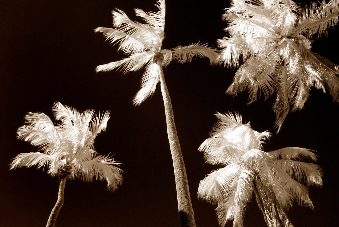 Four Palms