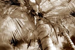 Teen Coconuts