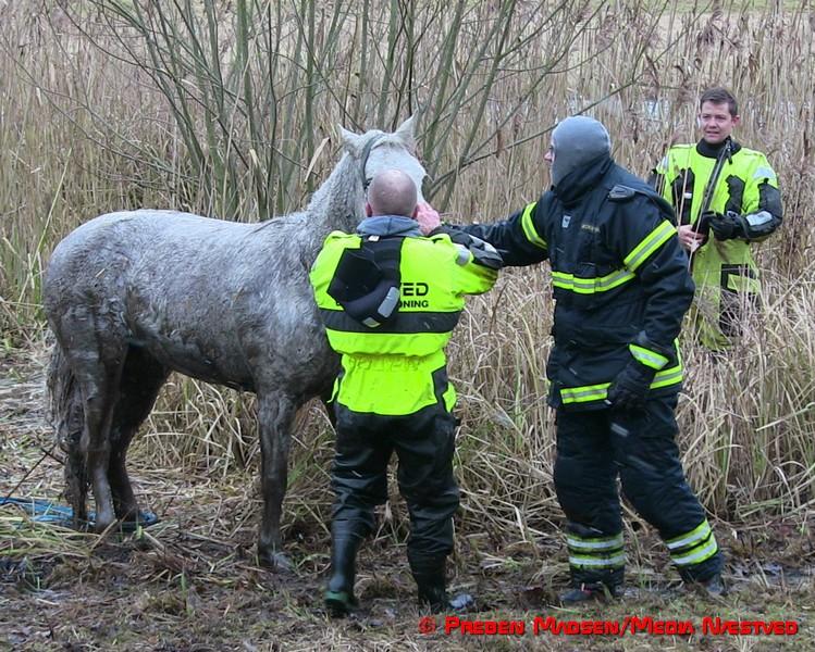 2017-02-06-Hest-i susaaen-Skelby-PrebenMadsen-IMG_7812