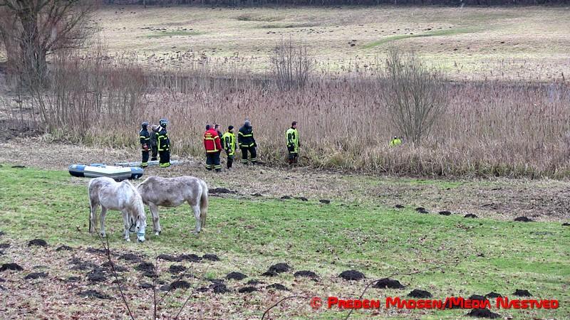 2017-02-06-Hest-i susaaen-Skelby-PrebenMadsen-IMG_7793